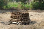 'Gobar uplas' or dried up manure cakes - used as fuel for cooking. People cannot afford firewood and have to resort to burning 'uplas'. This is one of the reasons why farmers have to use increasing amounts of chemical fertilizer.